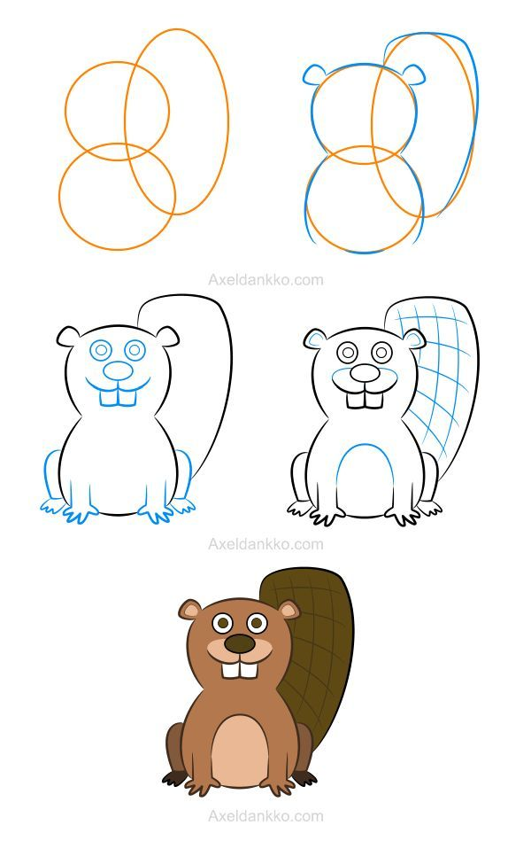 How to draw a beaver - Comment dessiner un castor | Learn to Draw in ...