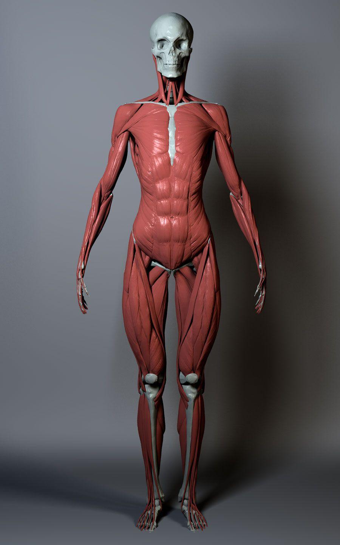 Anatomy 2 0 Page 2 Anatomy Reference Female Anatomy Human Anatomy