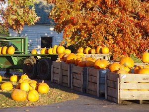 From pumpkin picking and fall foliage to wine tasting and festivals, there's a lot to do on the East End during the fall. Check out these great ways to enjoy a trip out east!