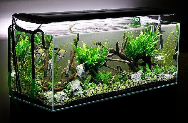 Aquascaping Aquascape Aquarium Freshwater Aquarium Plants For