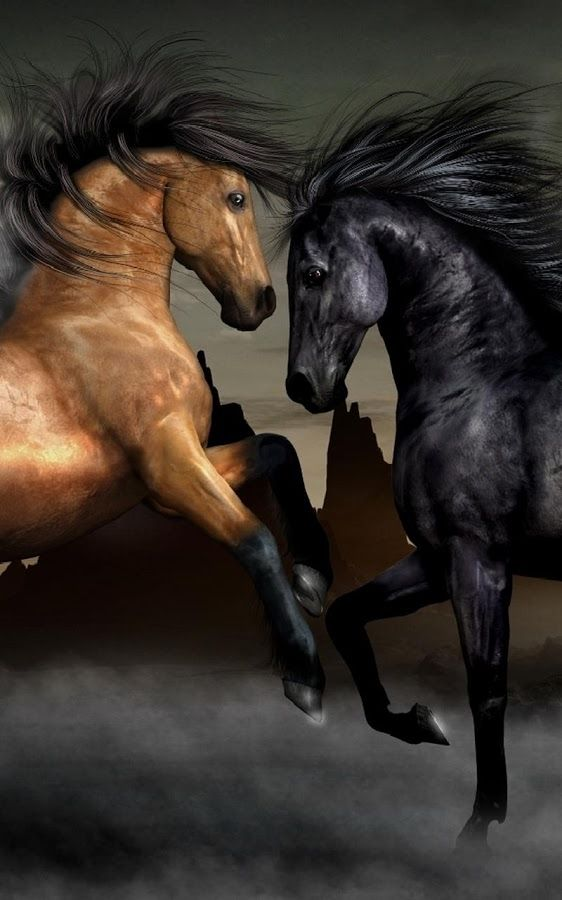 Horses Live Wallpaper Android Apps On Google Play Hatterek