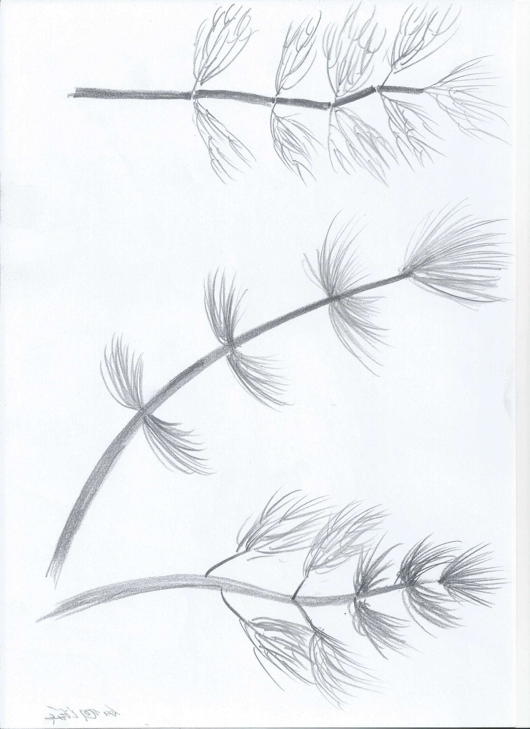 Sketch_Kelp8