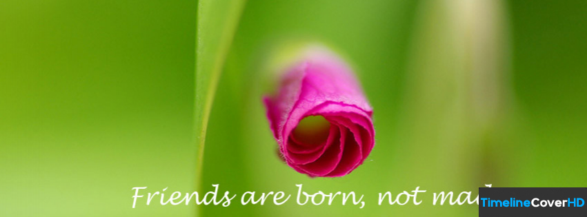 Friends Are Born Timeline Fb Covers Facebook Cover
