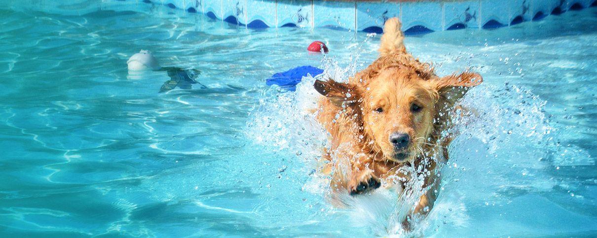 Pet Spa Katy Tx Pet Paradise Pet Spa Pet Resort