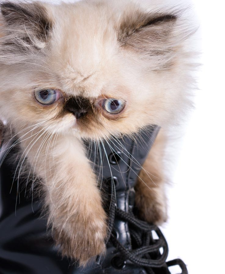 Home remedies for removing cat urine from shoes cat