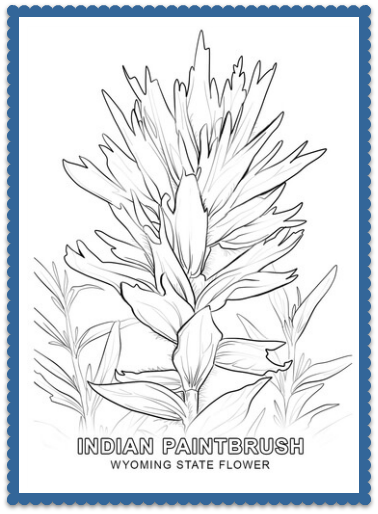 Wyoming State Flower - Indian Paintbrush by USA Facts for Kids ...