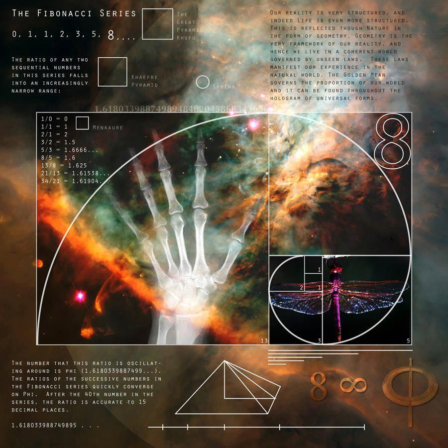 The fibonacci sequence or golden ratio the blueprint spiral malvernweather Images