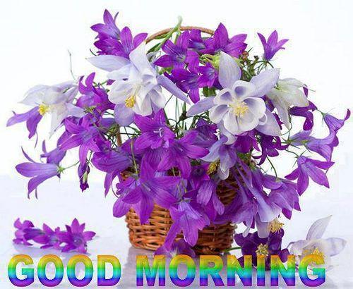 moin moin - http://guten-morgen-bilder.de/bilder/moin-moin-90/