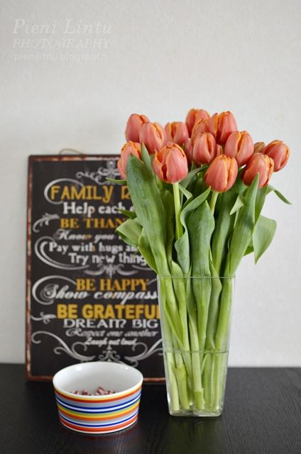 Pieni Lintu: Bring the spring indoors