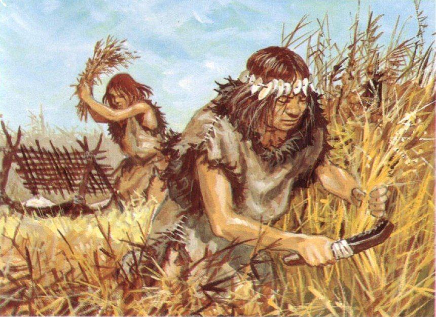 люблю картинки древние люди собирают растения того, цена