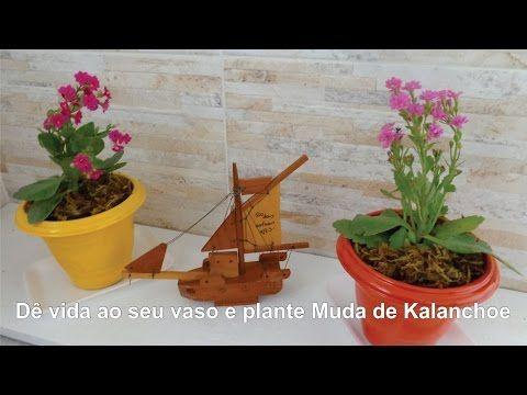 Como Multiplicar  Flores Da Forma Mais Facil  Que Existe (kalanchoe , violeta) - YouTube