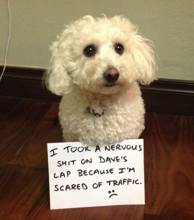 The Funniest Dog Shaming Pictures And Videos Ever! (Videos)