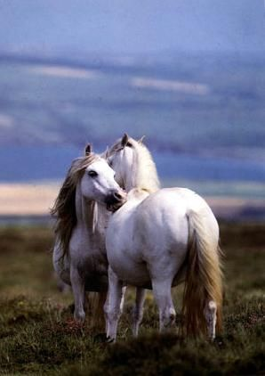 Beautiful White Horses, Out the Front Window