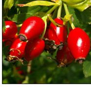 Rose Hips...Get 'hip' to this herbal vitamin C. It boosts immune health and is a great-tasting, tangy, caffeine-free energizer too!