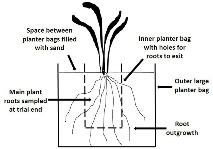 Tree Root Grow Diagram Google Search In 2020 Plant Roots Planter Bags Tree Roots
