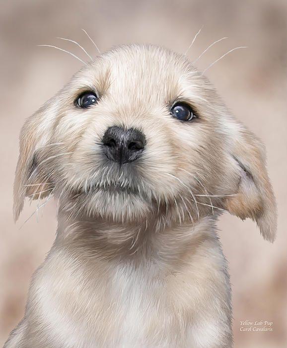Yellow Lab Pup Lab Puppies Dog Art Dog Cat