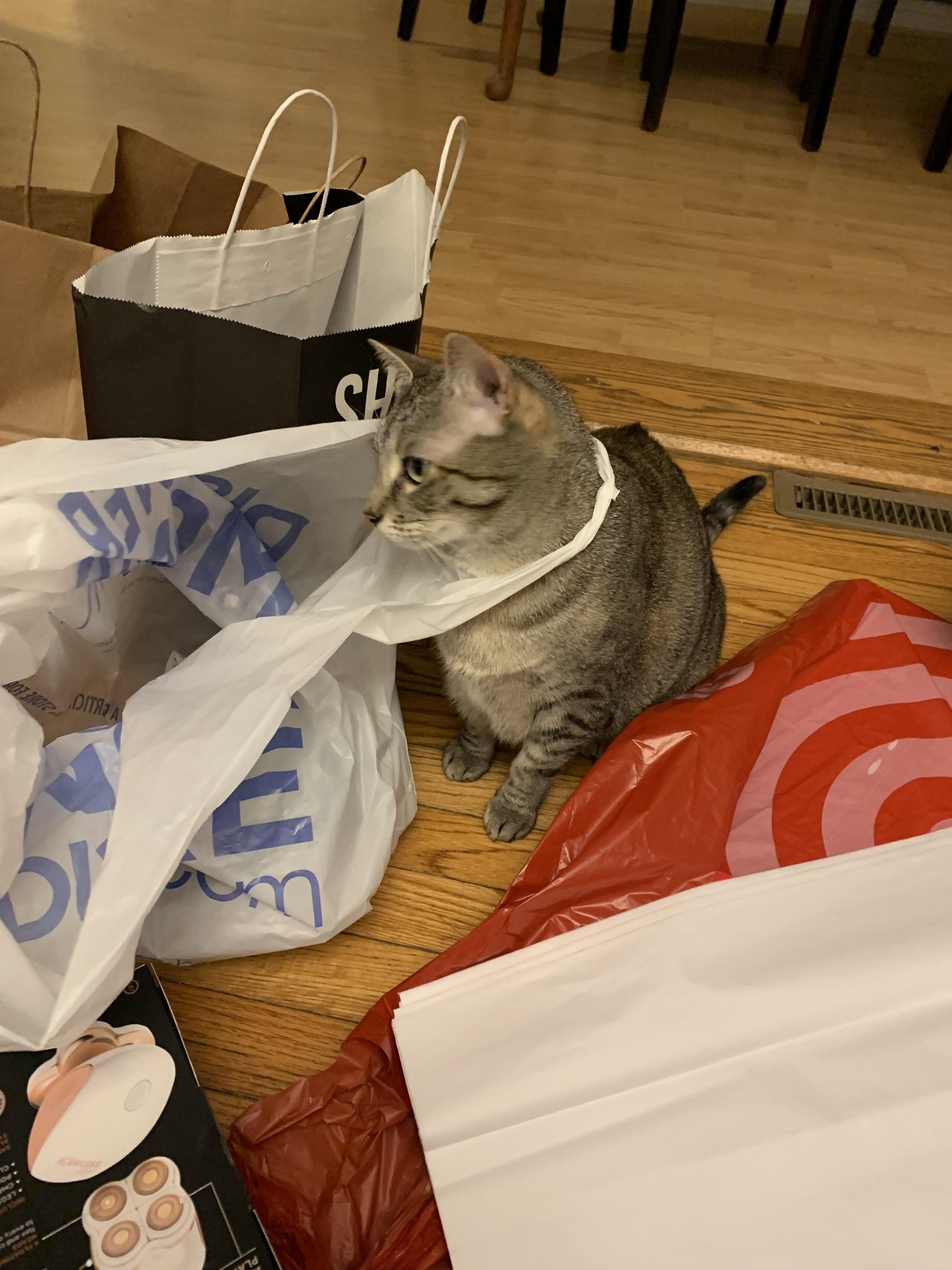 Dylan wanted to help wrap Christmas gifts | Baby cats ...