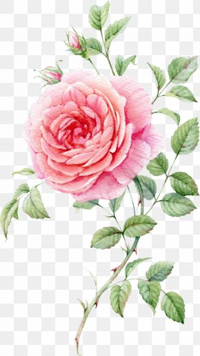 Watercolor Flowers Watercolor Painting Centifolia Roses Png 658x1063px Watercolor Flowers Artificial Flower Drawing Flower Bouquet Drawing Floral Painting
