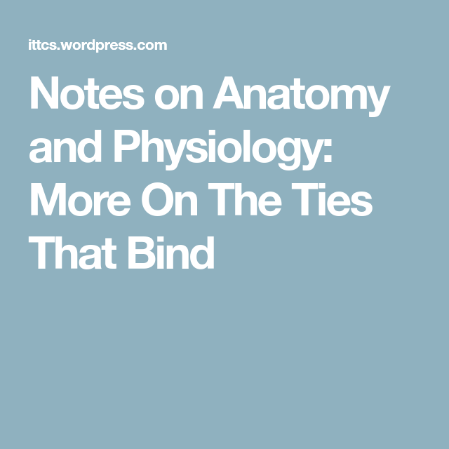 Notes On Anatomy And Physiology: More On The Ties That Bind