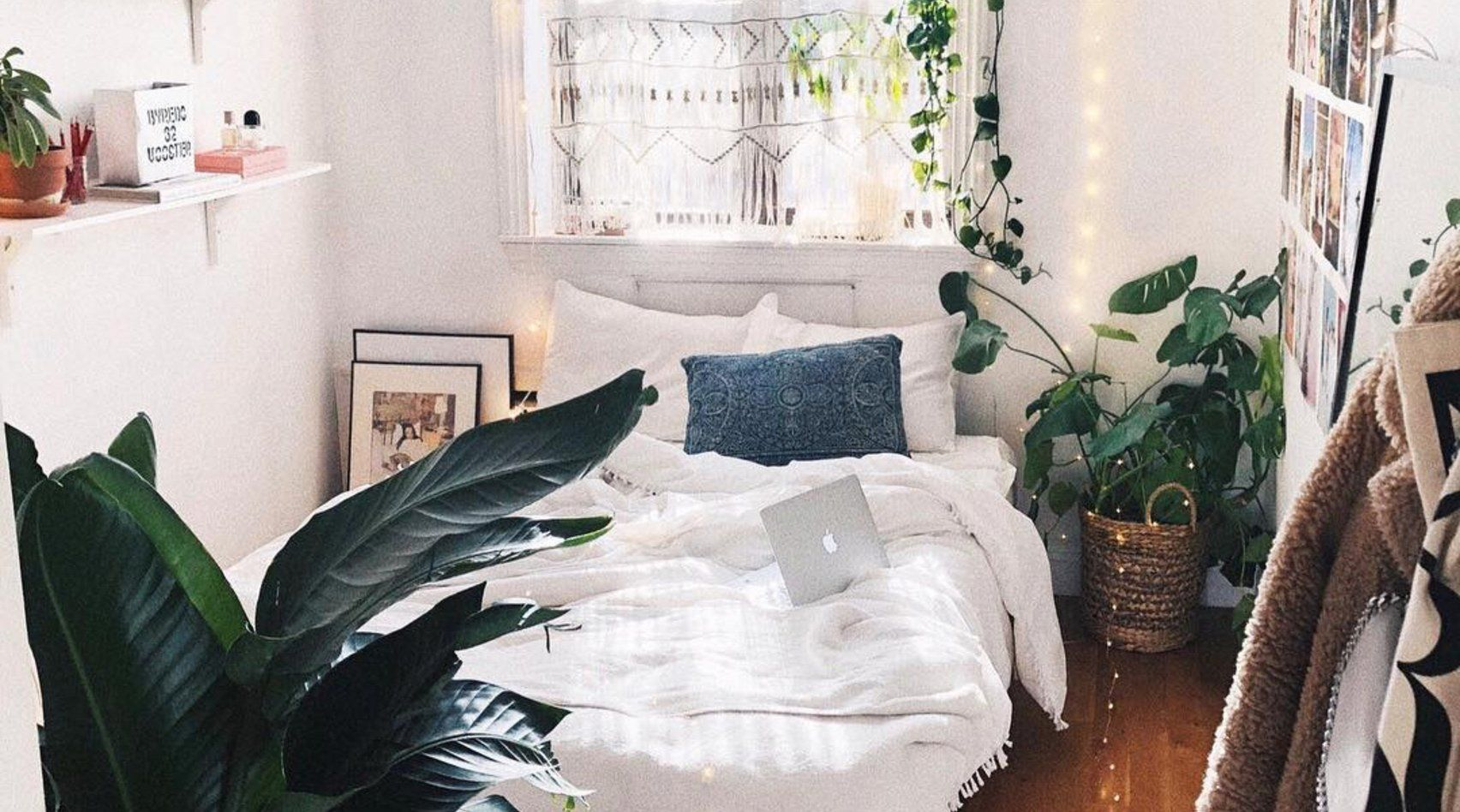 Nasa Erprobt Diese 5 Zimmerpflanzen Lassen Uns Besser Schlafen