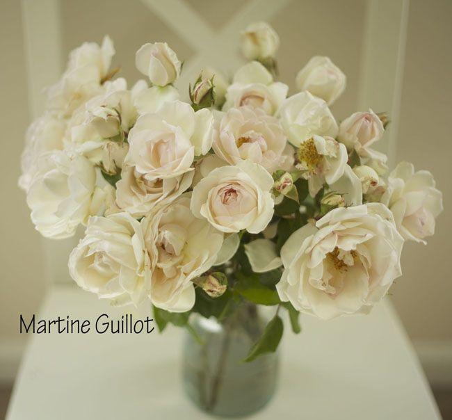 florabundance martine guillot a blush cream garden rose grown in santa barbara california - Cream Garden Rose