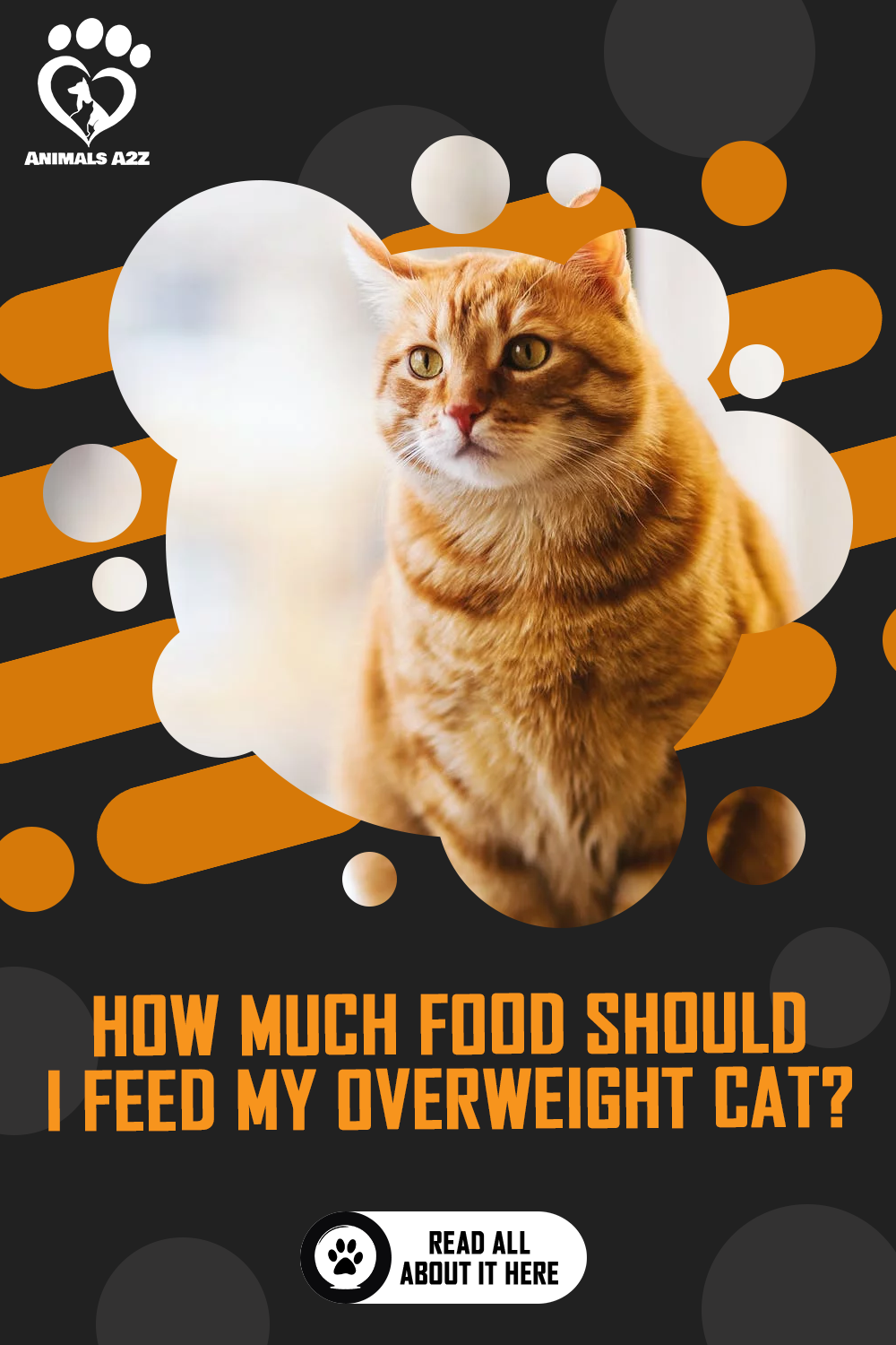 How Much Food Should I Feed My Overweight Cat Detailed Answer In 2020 Cat Care Cats And Kittens Kitten Health
