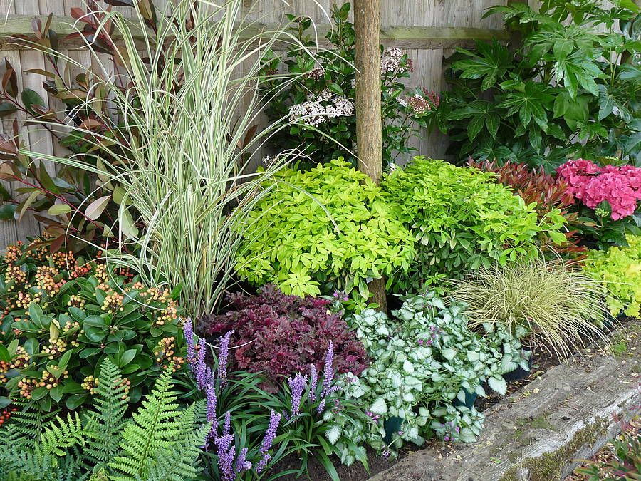 Image gallery maintenance border for Low maintenance border shrubs