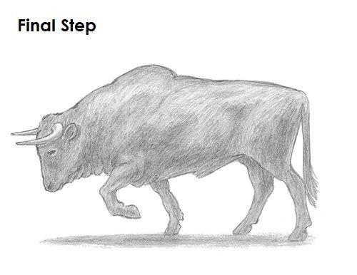 Bull Drawing Animal Drawings Easy Drawings Sketches Easy Drawings