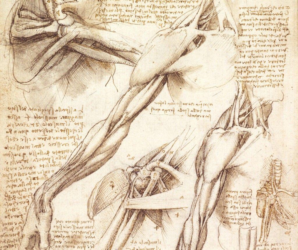 Da vinci medical illustration | Anatomical | Pinterest | Medical ...