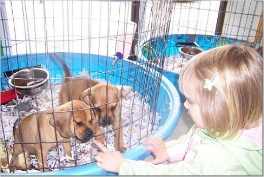 Veterinary Professionals Stand Together Against Puppy