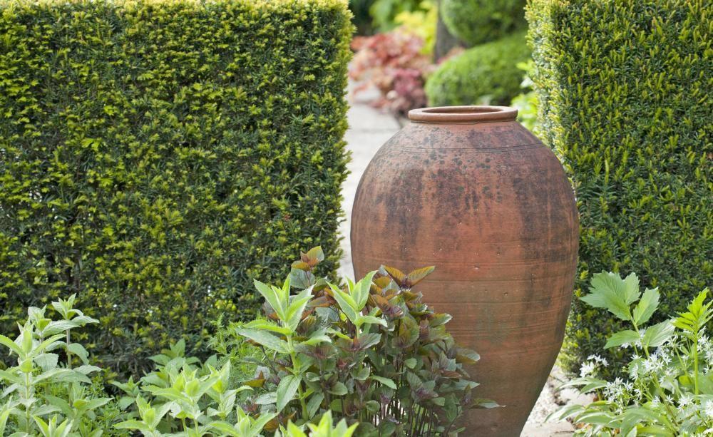 Eibenhecken Richtig Pflanzen Sichtschutz Im Garten Pinterest