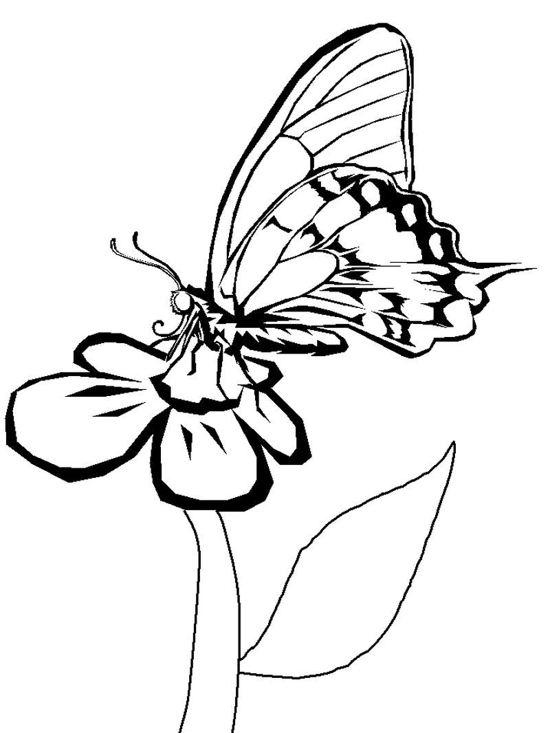 Butterfly Coloring Pages To Print Out Free Coloring Page Animals