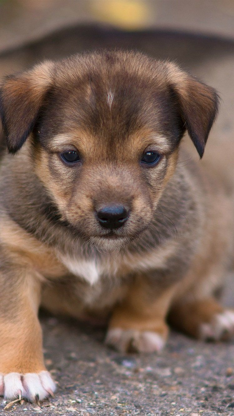 Cute puppies wallpaper for mobile phone, tablet, desktop computer and other devices HD and 4K ...