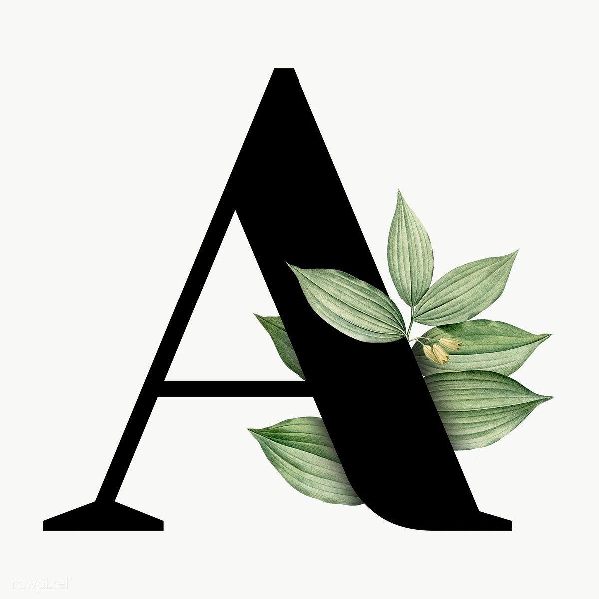 Botanical Capital Letter A Transparent Png Premium Image By Rawpixel Com Aum Alphabet Wallpaper Monogram Wallpaper Lettering Alphabet Fonts
