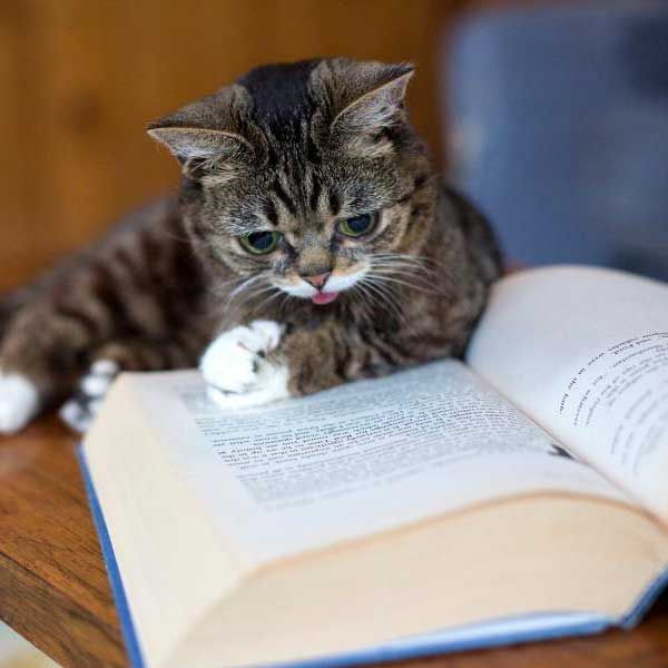 Move over Grumpy Cat, Lil Bub is here - World - DNA