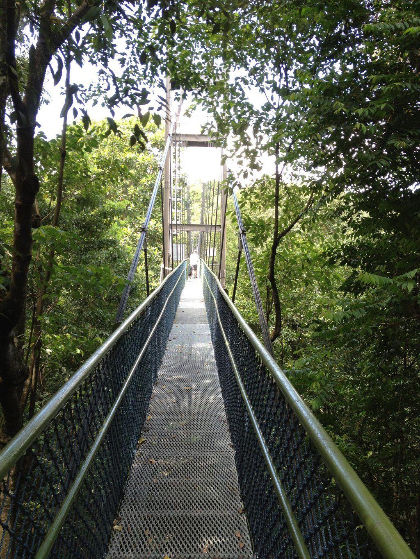 Macritchie Nature Trail Trip Advisor Nature Singapore Travel