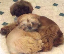 Best friends... Tipsy and Frannie <3