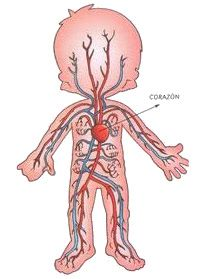 Proyecto Cuerpo Humano Body Systems Science And Nature Clip Art