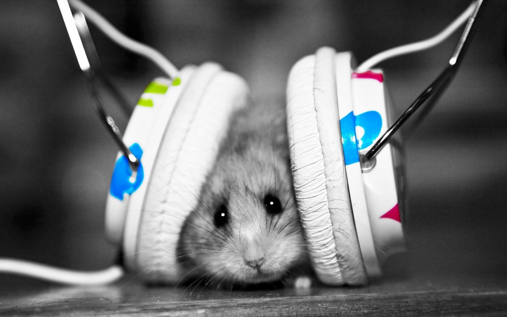 Download Wallpaper Funny Music Fan Music Little Hamster Hd Background Wallpaper Hd Musik