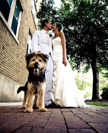 Cute dog photo for wedding