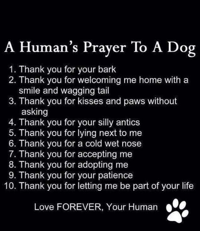 Humans prayer to a dog