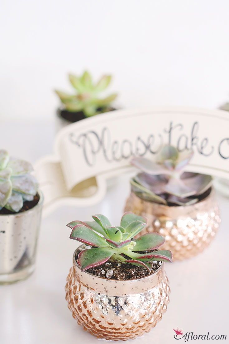 Get The Look: Succulent Wedding Favors | Favors, Weddings and Wedding