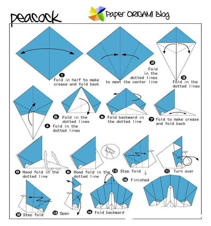 PEACOCK ORIGAMI STEP BY INSTRUCTIONS