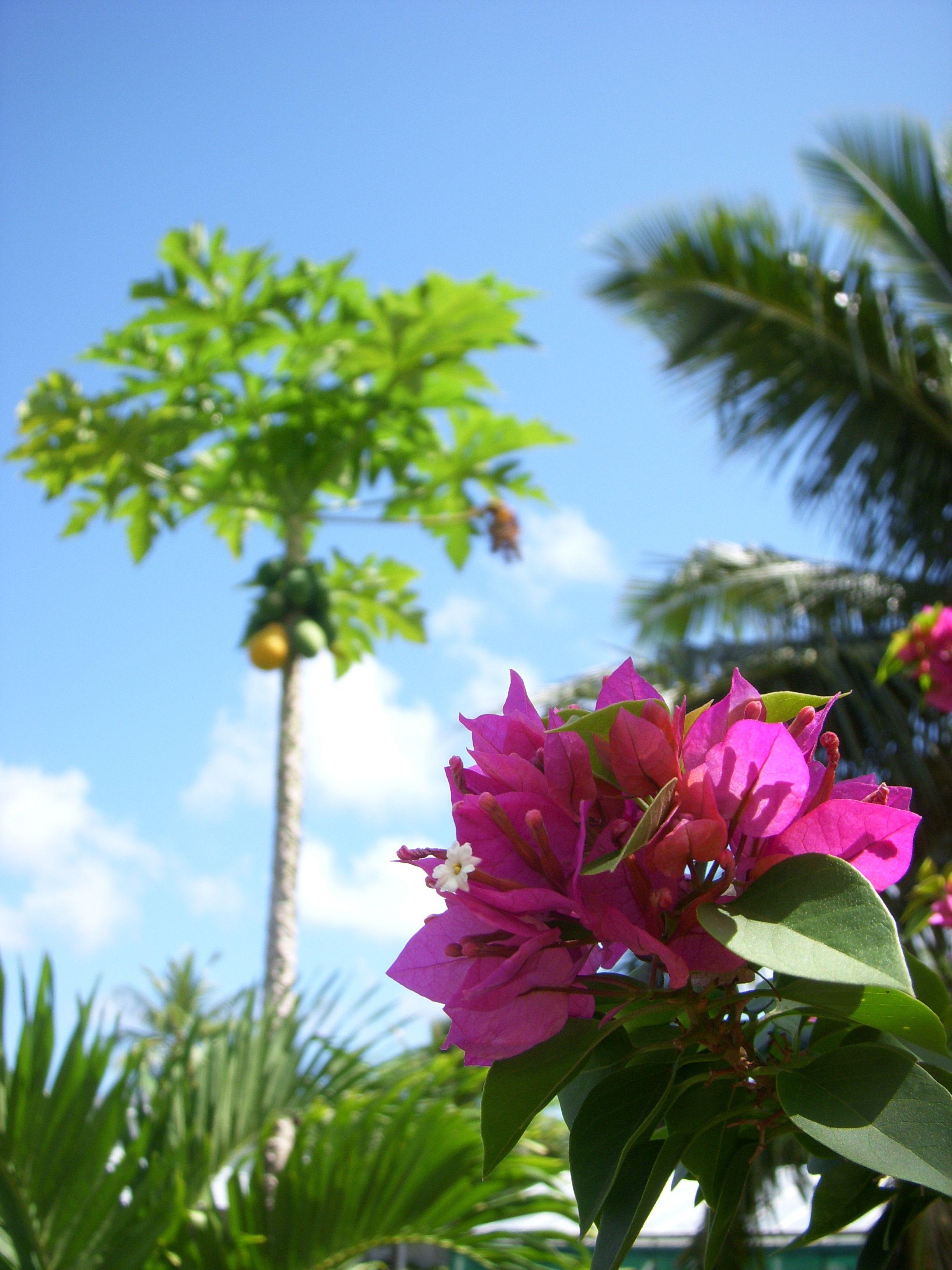 gotta love the tropics
