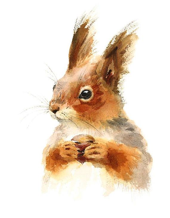 Squirrel Holding A Nut Watercolour Painting Clip Art Image