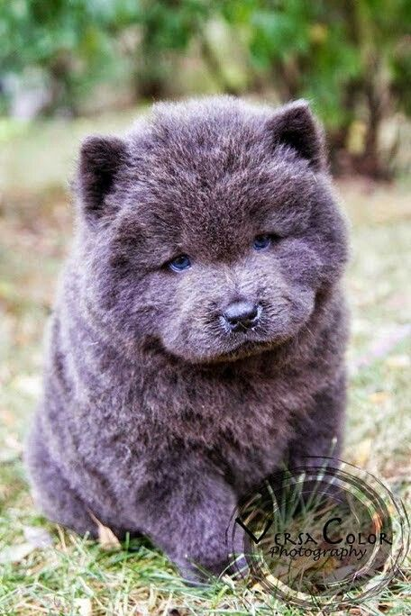 Eric Shared Cute Baby Animals Cute Dogs Fluffy Dogs