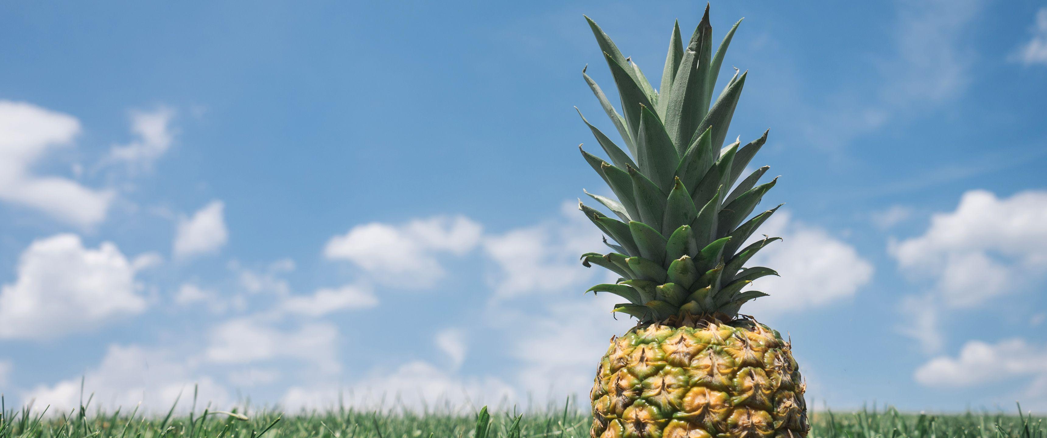 21 9 Ultrawide Hd Wallpaper 3440x1440 Sunbathin Pineapple Hd Wallpaper Sci Fi Wallpaper 3440x1440 Wallpaper
