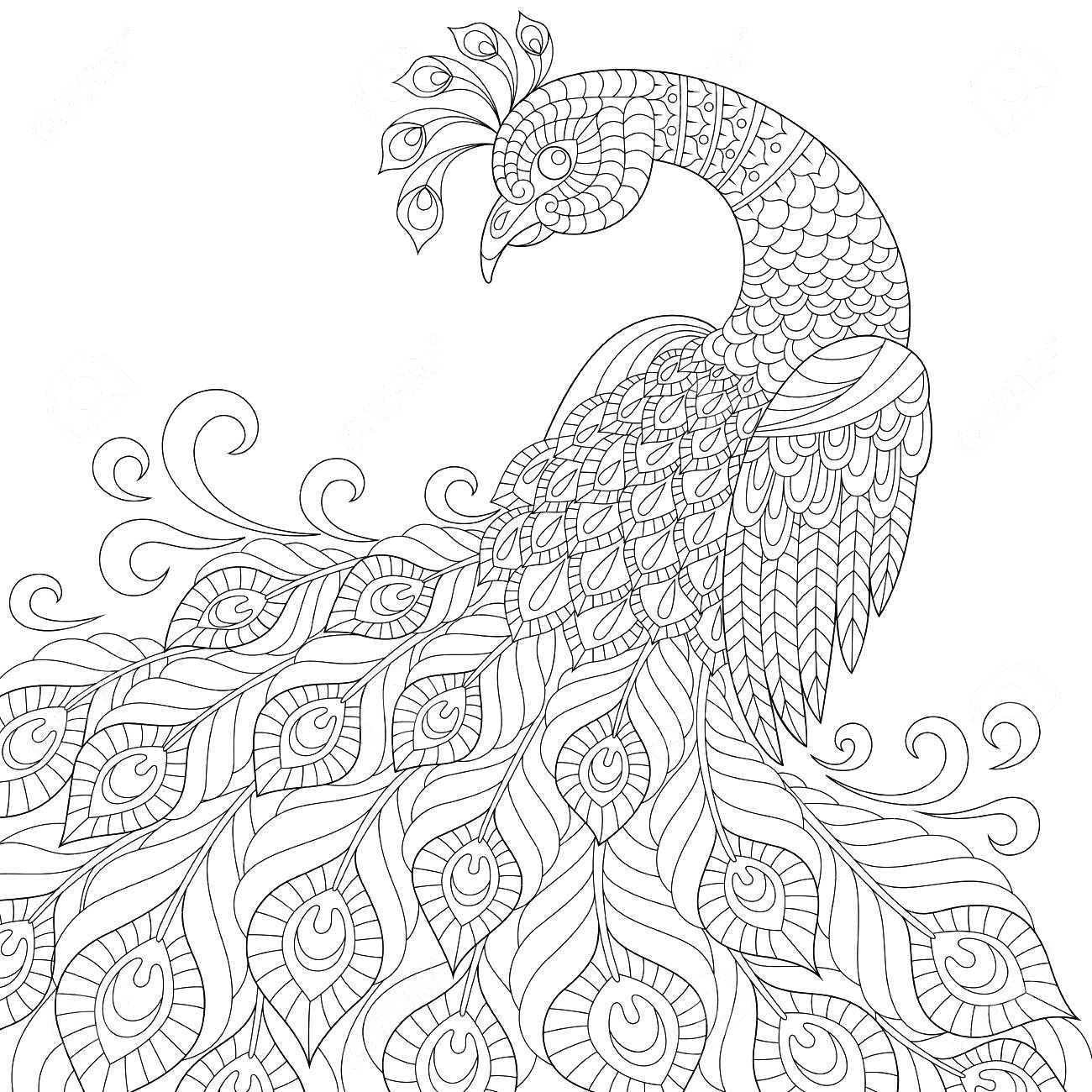 Yetişkinler Için Tavus Kuşu Boyama örneği El Işleri Pavo Real