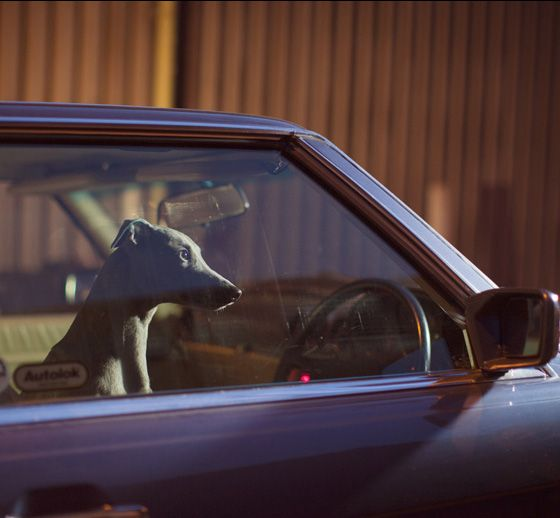 MUTE: the silence of dogs in cars, by Martin Usborne