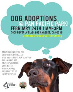 Dog Adoption Event Flyer Pet Adoption Event Dog Adoption Event Dog Marketing